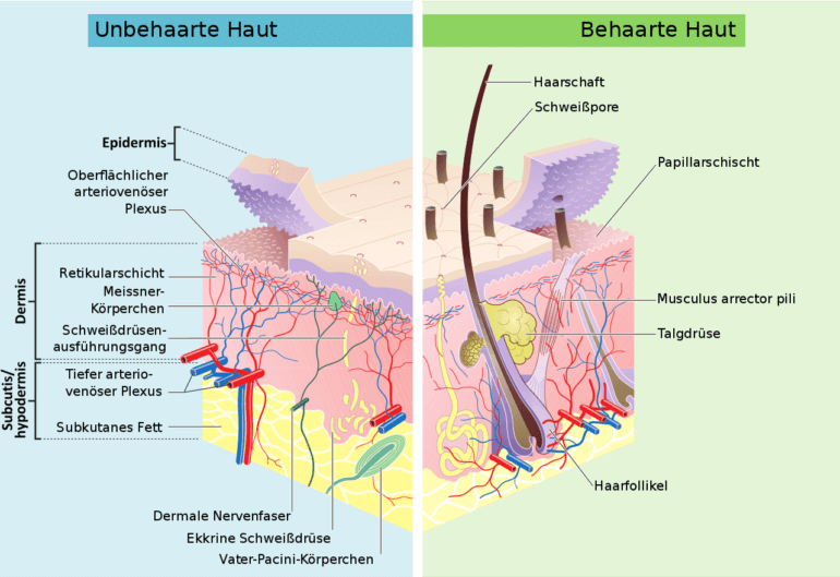 Hautschichten - Schweißdrüsenentfernung (Lipokürretage)